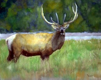 Elk Watercolor Print by Mary Jo Zorad
