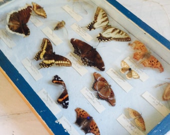 Butterfly Collection, 1800s , Antique specimen collection.