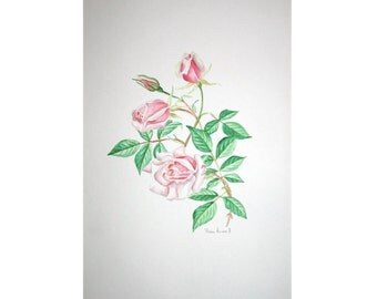 ROSES FLOWER WATERCOLOR - original vintage painting - botanical floral hand made painting -  a rose bouquet