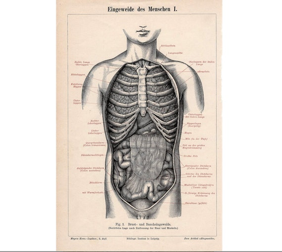 1894 HUMAN ANATOMY innards antique anatomy print original lithograph