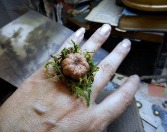 the pumpkin patch Genuine mini dried terrarium pumpkin and green moss lichen ring. Quirky weird adornment