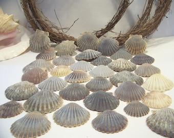 Seashell Collection Nautical Shell Craft Supply Wedding Home Decor