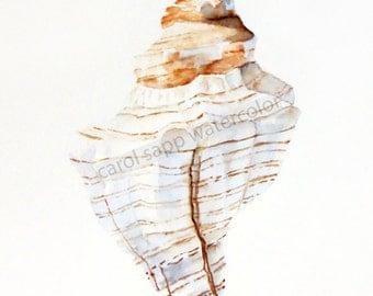 sea shell watercolor archival print by Carol Sapp