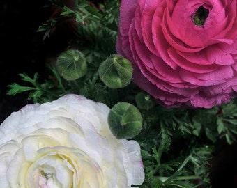 Flower Art , Square Print, Spring Decor, Girl Nursery , Garden Art, Botanical Print , Nature Art, Ranunculus Flower, Fine Art Photography