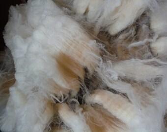 Raw Merino Wool #80-Beautiful White Fleece, Unwashed In the Grease 4 oz