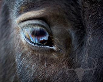 Equine Eye   Original Fine Art Photograph