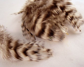 24  feathers natural grizzly natural  1 to 2 inches craft feathers