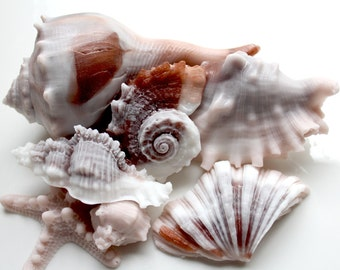 SHELL SOAPS, Large Shells & Starfish Soap Set, Beach Soap, Sinistral Shells, Sea Urchin Shell, Custom Scented