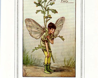THE GROUNDSEL FAIRY Vintage Book Plate c. 1940 Original Page Book of Flower Fairies Cicely Barker