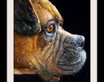The Portrait  - Boxer Dog Large Limited Edition Art Print direct from English Artist Stephen Russell from RussellArt