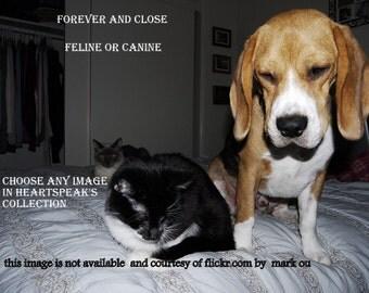 tragic/sudden death..... forever and close /choose an image/canine or feline/rainbow bridge cards/unique empathy condolence cards