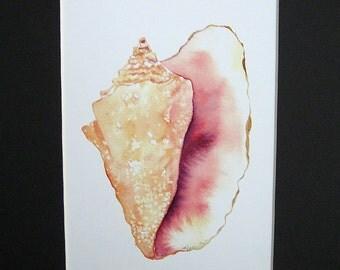 Conch Shell Watercolor Print 8x10