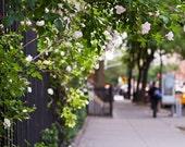 New York Art, West Village Architecture Photography, New York City Wall Art, Manhattan Prints, Garden Prints, West Village Summer Nights