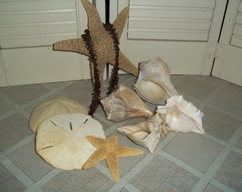 Collection of 7 seashells sea Biscuit, starfish, Conch sand dollar, faux seaweed Cottage beach decor nautical..Reduced..WAS 18.88