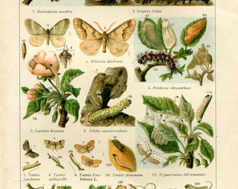 1920s Insects Vintage Print Color Lithograph