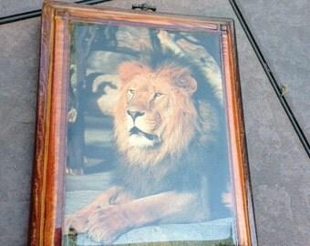 vintage Lion wood plaque
