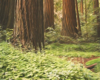 California Coast Wall Art, Coastal Giants Redwood Forest - Fine Art Photographic Print