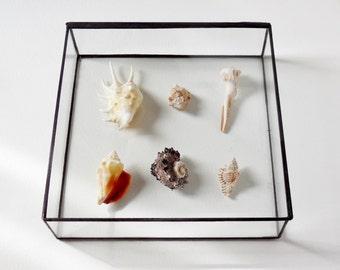 Large Glass Display Box Glass Box Clear Glass Jewelry Box