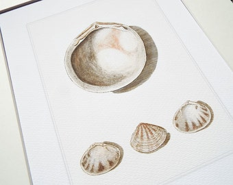 Dusty Pink & White Sea Shell Study 5 Archival Print on Watercolor Paper