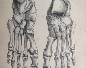 Antique 1890s Medical Anatomy Diagram BONES OF FOOT Feet  Victorian Bookplate