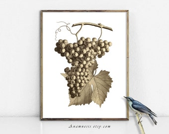GRAPES IN SEPIA - large digital image download - printable antique fruit illustration for image transfer - totes, pillows, wall decor