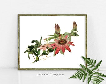 PASSION FLOWER - digital download - printable 1800's flower illustration retooled by Anamnesis - image transfer - totes, pillows, wall decor