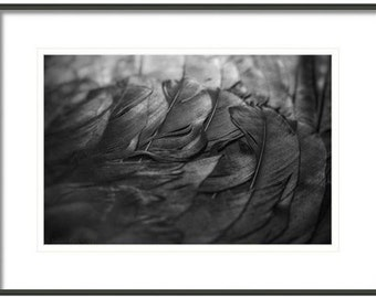 Crow Feathers, Feathers, Black and White Feathers, Fine Art Photography, Black and White Photography, Home Decor
