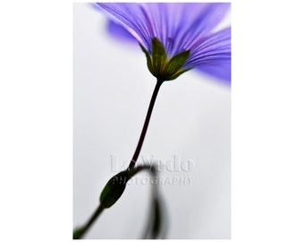Quiet Flower Photo, Simple, Peaceful, Blue Flax, Amethyst, Royal Blue, Periwinkle, Simple Home Decor