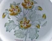 Vintage Retro Port Meirion Botanic Garden Barbados Cotton Flower and Trailing Bindweed Bowls 1972
