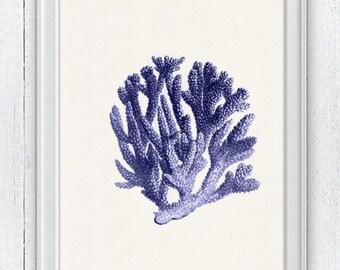 Blue coral no.06 - sea life print - Antique sealife Illustration - Marine  sea life illustration A4 print SPC064
