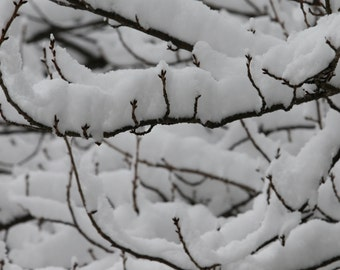 Snow Tree Branches 3