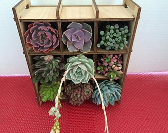 Succulent Plant Nine Plant Shadow Box Complete Kit