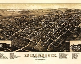 Tallahassee, Florida - Panoramic Map (Art Prints available in multiple sizes)