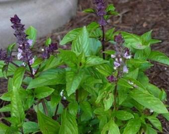 Basil- cinnamon- 200 seeds