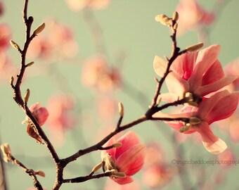 Pink Dogwood flowers, Floral print, flower photography, Dogwood tree fine art photography, nursery room art, home decor, wall decor