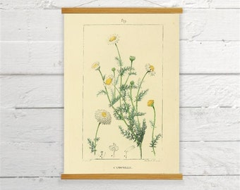 Chamomile Camomile Vintage Botanical Wild Flower Herb Canvas Poster Print Wooden Wall Chart Size A3 16x11