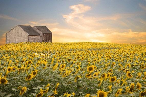 Sunflower Print Original Photography