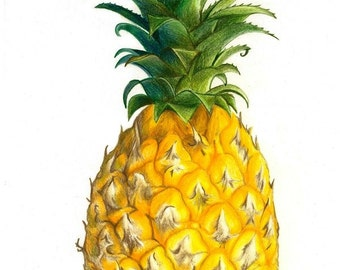 Black or colorful Pinapple - Temporary tattoo