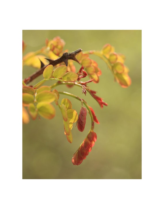 Botanical photography art print, tree branch macro photo, red tree leaves, gold tree leaves, plant photography, nature photography, wall art