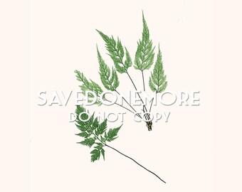 Vintage Botanical Fern Print Instant Download Make Your Own Art {Fern 37}