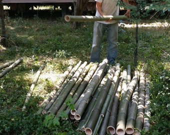 Moso Timber Bamboo Poles