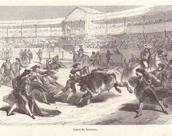 Bull fight original 1872 zoology print - Arena, natural history, victorian - 143 years old French antique engraving illustration (A612)