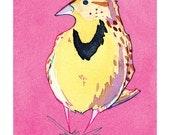 État des oiseaux - Sturnelle de l'ouest