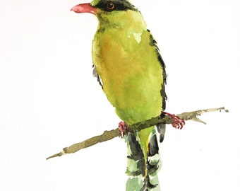 Green Magpie Bird  , Bird watercolor painting, Bird art, watercolor, Art print size 8X10 inch for room décor and special gift  No.136