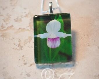 Ladyslipper • art pendant necklace