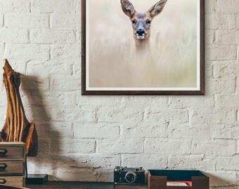 Wildlife Print of Roe Deer, Wildlife Photography, Nature Photography, Wall Art, Animal Art Print, Fine Art Print, Decor, Nature Print, Art