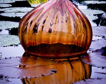 Fine Art Print, Nature Photography, Water Lily, Chihuly, Water Reflections, Botanical, Purple and Orange, Purple, Orange, Garden Art, Glass