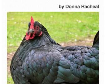 Keeping Backyard Chickens