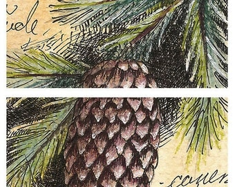 Spruce Tree Botanical Study ACEO 2.5 x 3.5 inches Watercolor Illustration