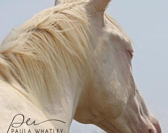Horse face photo, white horse print, Horse Photography, white horse photo, white horse picture, western decor, Horse Art Print, equine art